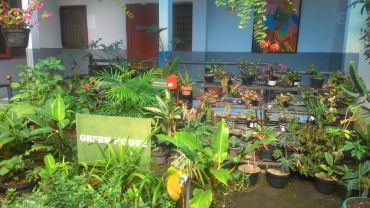 green-house-sebelum