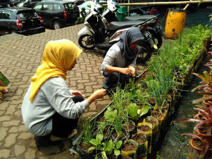 kebun-sayur-perawatan